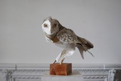 Anna Wili Highfield Paper Sculpture Copper Pipe Sculpture #sculpture #owl #paper