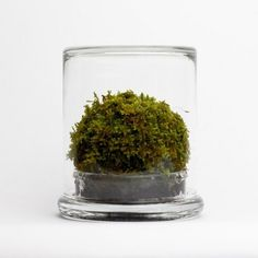 ISO50 Blog – The Blog of Scott Hansen (Tycho / ISO50) » The blog of Scott Hansen (aka ISO50 / Tycho) #terrarium #moss