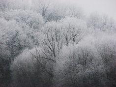 #trees