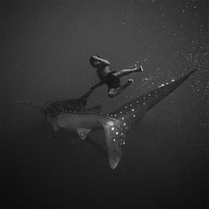 Black and White Underwater Photography by Hengki Koentjoro #white #dive #black #shark #photography #and #swimming #underwater
