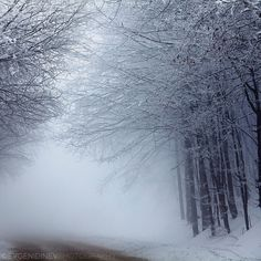 Lost Way - Evgeni Dinev Photography #snow #trees