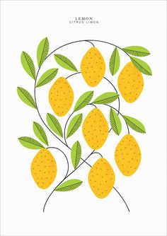EtsyFinds_SarahAbbot_06 #illustration #lemon