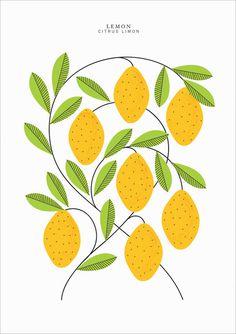 EtsyFinds_SarahAbbot_06 #illustration #lemon