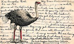 All sizes | Ostrich | Flickr - Photo Sharing! #postcard