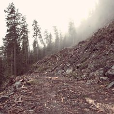 Clearcut II #photography