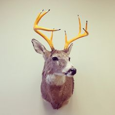 e214604c969511e3ba1612f19a0f09aa_8.jpg (640×640) #interior #antlers #deer #design #studio #pencils