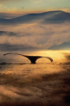 Whale #whale #ocean #sunset #water