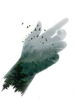 #waptreeoverlay #trees #doubleexposure #fog #green #nature #clipart #birds #hand