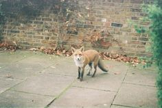 Life on Sundays #photography #fox