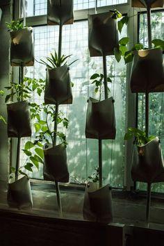 THE BROWN WORKSHOP #plants #garden #nature #window #green