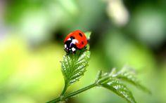 Macro Ladybug #inspiration #photography #macro