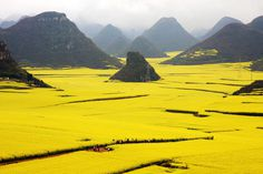 Luoping Rape Flower Fields | Flickr - Photo Sharing! #yellow #landscape #photography #china #nature #flower #rapeseed #valley #beauty