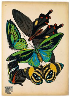 PrintCollection #modern #french #deco #butterflies #entomologist #papillons butterflies #classic posters