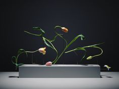 Carl Kleiner | PICDIT #flower #photo #photography
