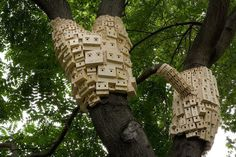 Bunches of Birdhouses Wrapped Around Trees – Fubiz™ #birdhouse