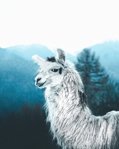 #folkscenery: Adorable Animal Portrait Photography by Douglas Fir