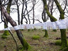 Tree Line Project #photography #installation #illusion