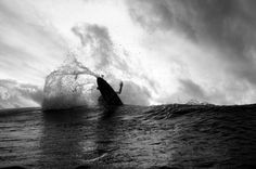 Surf - Dane Peterson Photography