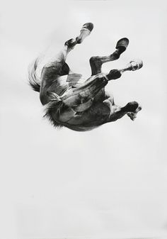 I live and I love / Romancero Gitano #horse #white #fall #black #photography #and #surreal #collage #animal