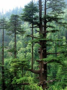 tumblr_m1ry0hzgpx1r2vwz4o1_500.jpg (500×667) #trees