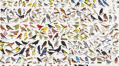 bird, chart, many, birds, illustration