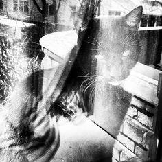 All sizes | TysonTheCat | Flickr - Photo Sharing! #ghost #instagram #tyson #cat #reflection