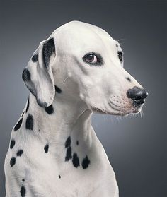 The Reel Foto: Tim Flach: Top Dog