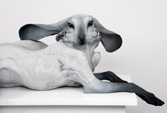 #rabbit #sculpture