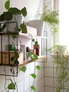 Pinned Image #tiles #plant