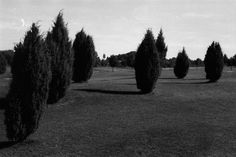 _. | Triangular Love. #photography #black and white #love #trees #golf #rollei #iso 100