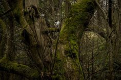 Forest | Flickr: Intercambio de fotos #rain #bosque #forest #moss #green