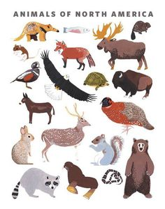 North American Animals by Keiko BrodeurOn the Wall #keiko #brodeur #illustration #animals