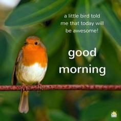 16 Good Morning Images to Make You Smile - Good Morning