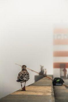 when fog reaches lighthouse #photography