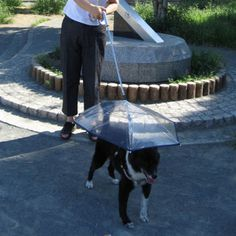 Pet Umbrella With Leash #gadget