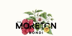 The Moreton Bondi