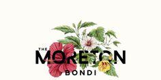 The Moreton Bondi #bondi beach #botanic #hibiscus #property