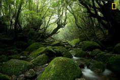 Moss Forest by Tetsuya Hosokawa