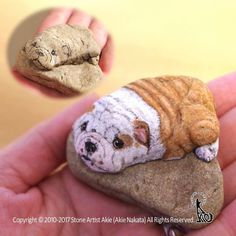 Realistic and Detailed Animal Paintings on Stones by Akie Nakata