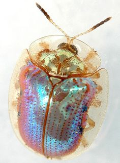 Pinned Image #bug #rainbow