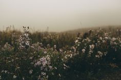 Likes | Tumblr #meadow #flowers