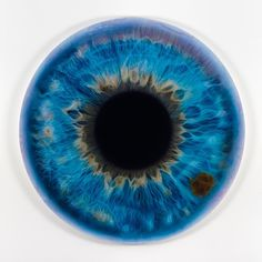 Iris,Blue,Painting,Detailed | A Creative Universe #pupilla