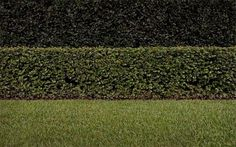 brad_moore_01.jpg (500×313) #lawn #photography #minimal #landscape