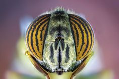 Extreme Macro Photography of Insect by Paulo Latães #macro #photography #insects #pauloLatães #Animals