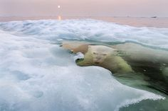 2013 National Geographic Photography