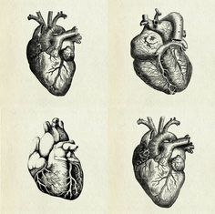 coqueterías - (via loveyourchaos) #heart #illustration