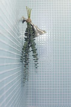 tumblr_mm80tkR9Go1r7wajzo1_1280 #shower #plant