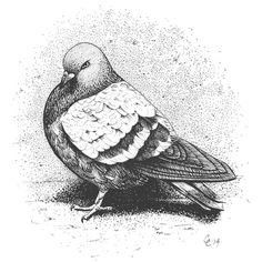 """City Pigeon"" by Chris Cerrato   http://www.cerratosaurus.com/"