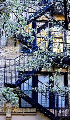 Likes | Tumblr #stairs #building #tree