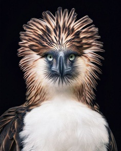 Magnificent Wild Animals Portrait Photography by Tim Flach